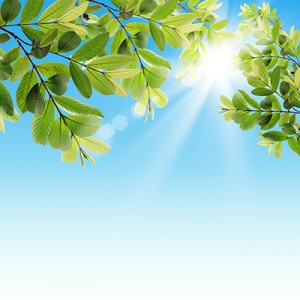 Leaves-and-Sky_Small-300x300[1]